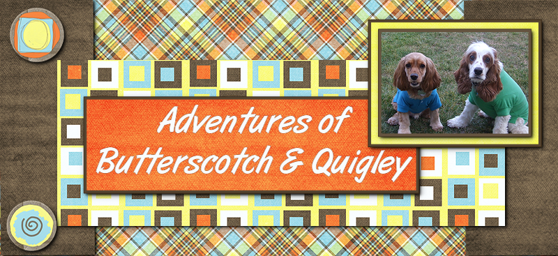 Adventures of Butterscotch and Quigley