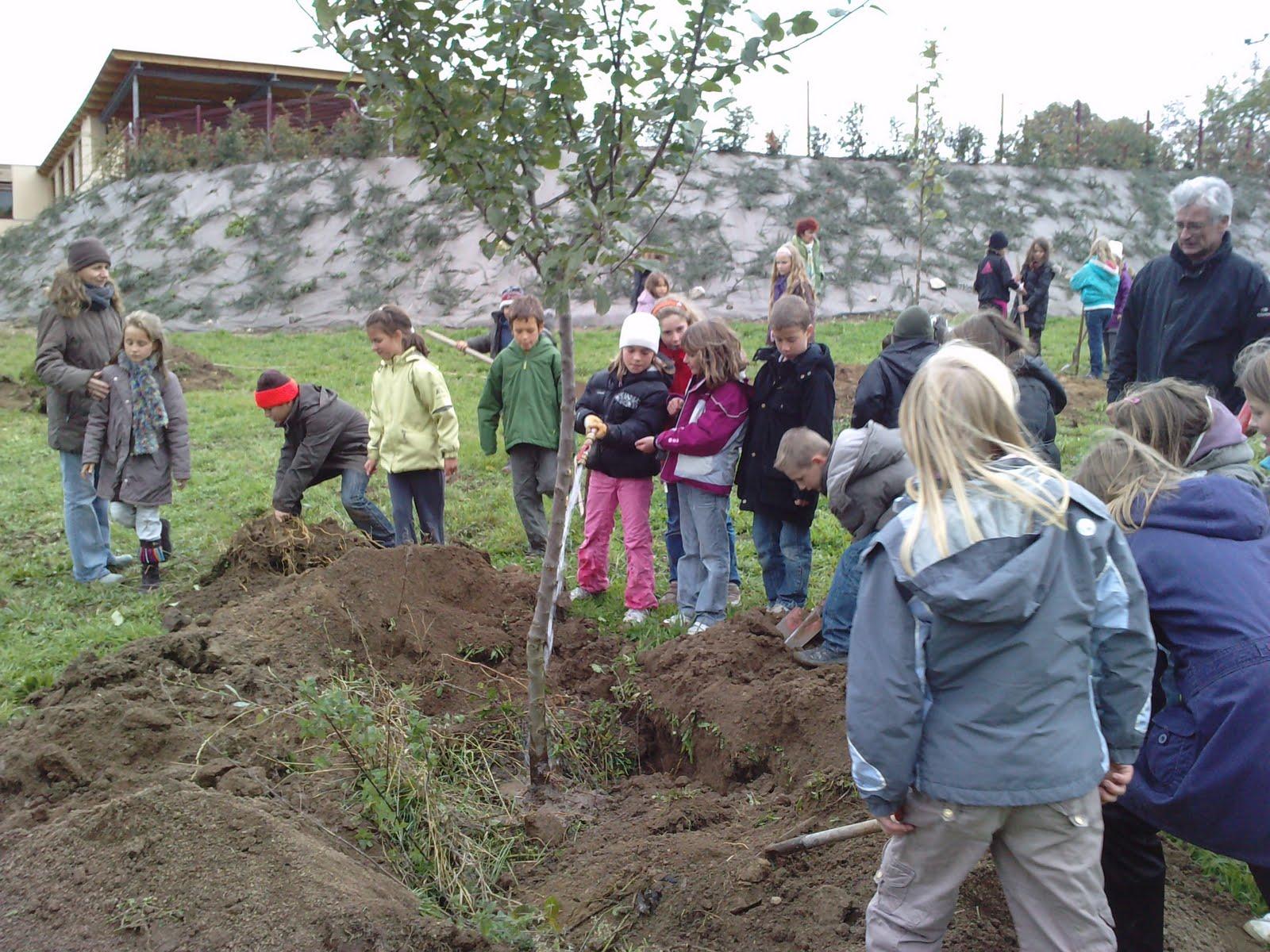 Commune de loubeyrat blog d 39 informations municipales - Plantation d un fruitier ...