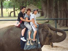 El Elephante y nosotros