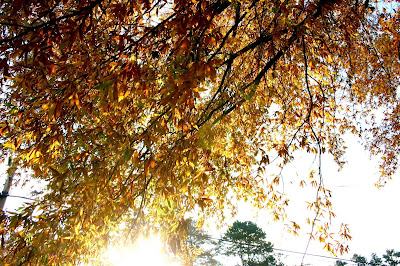 Morning sunrise through autumn leaves