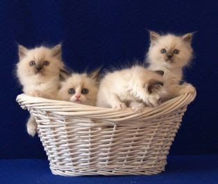 kitten_basket.jpg