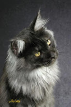 Dreamstar-she-cat
