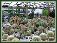 Numerous kinds of Cactus at the Cactus Valley, Cameron Highlands