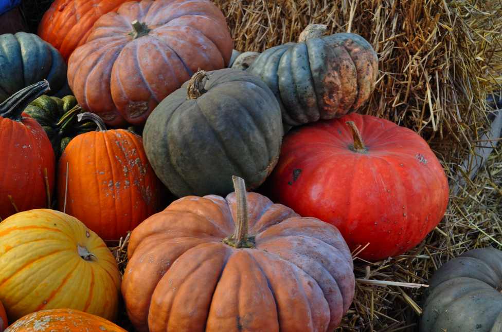 the ex expatriate 39 s kitchen edible pumpkins links and