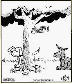 humor grafico cosas de animales