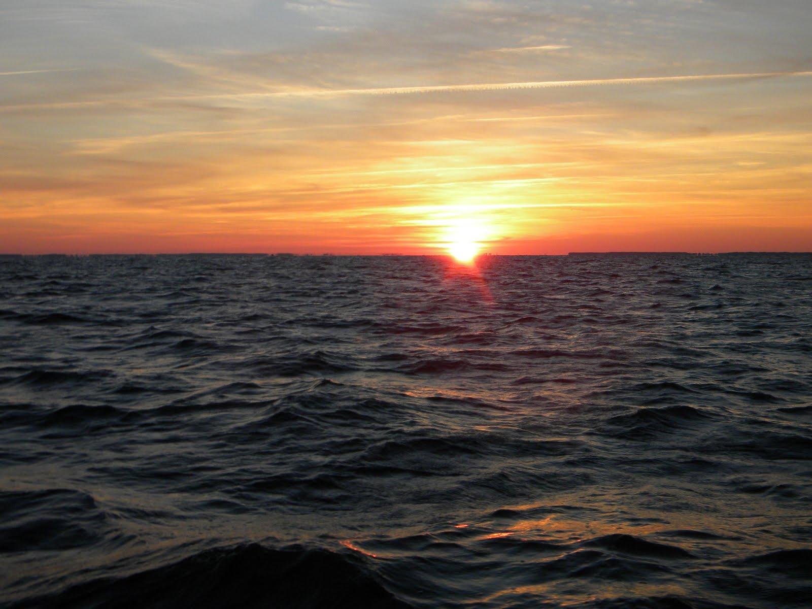 Tourist first maryland chesapeake bay fishing for Chesapeake bay fishing