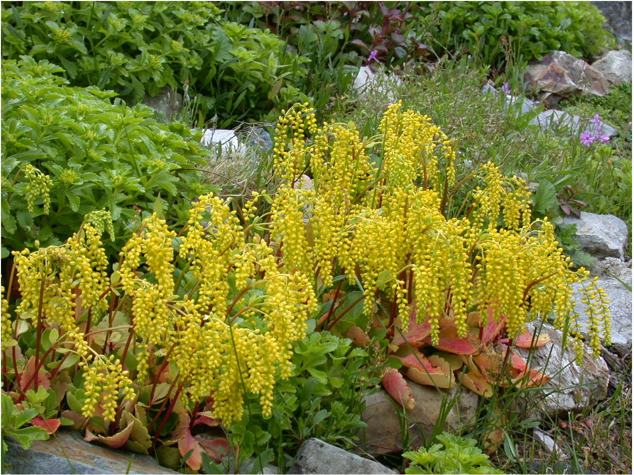 Blooms for all seasons beautiful and unusual plants - Interesting houseplants ...