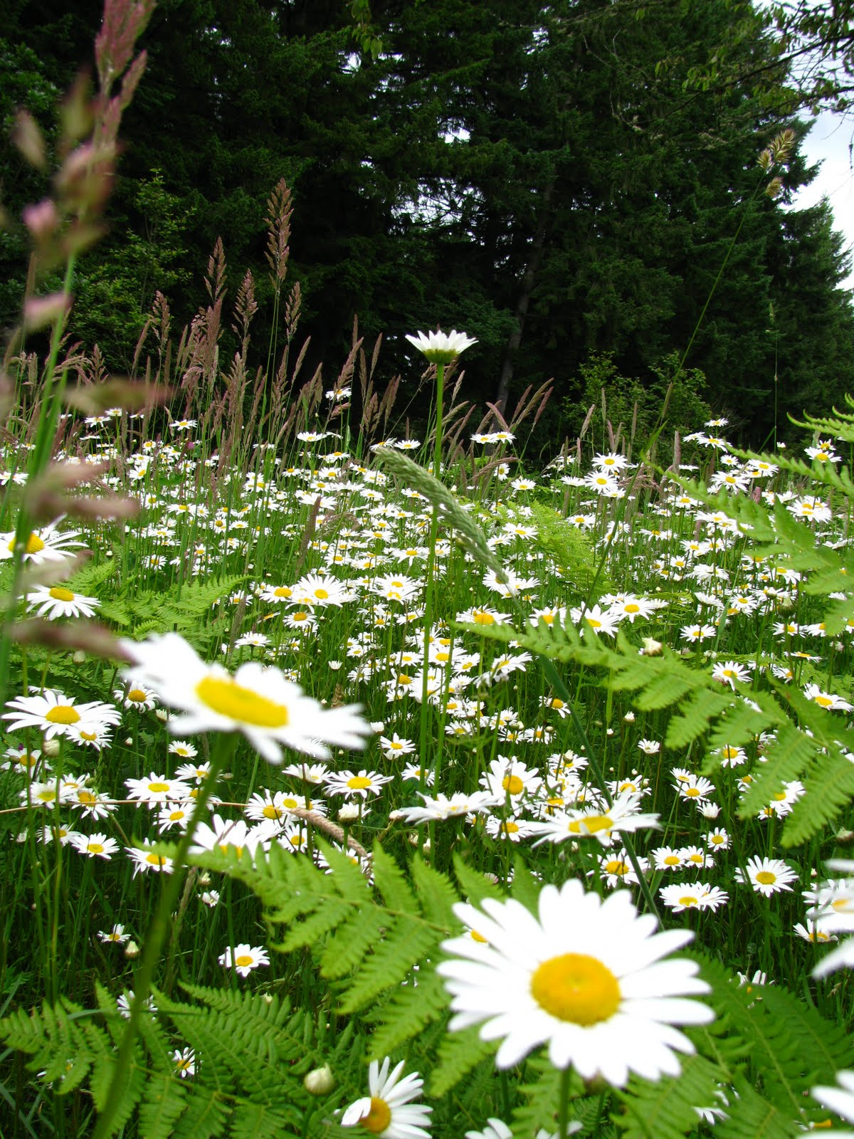 the abandoned field of daisies dark mysteries
