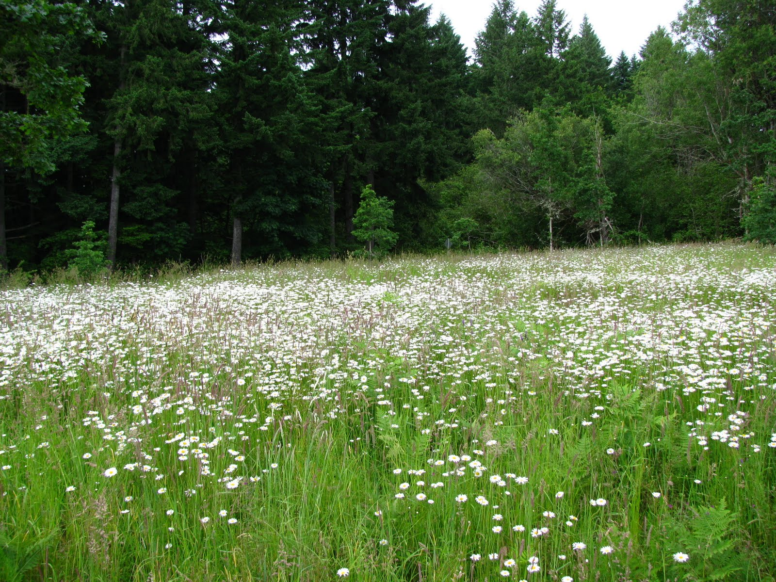 The Abandoned: July 2010 Field Of Daisies