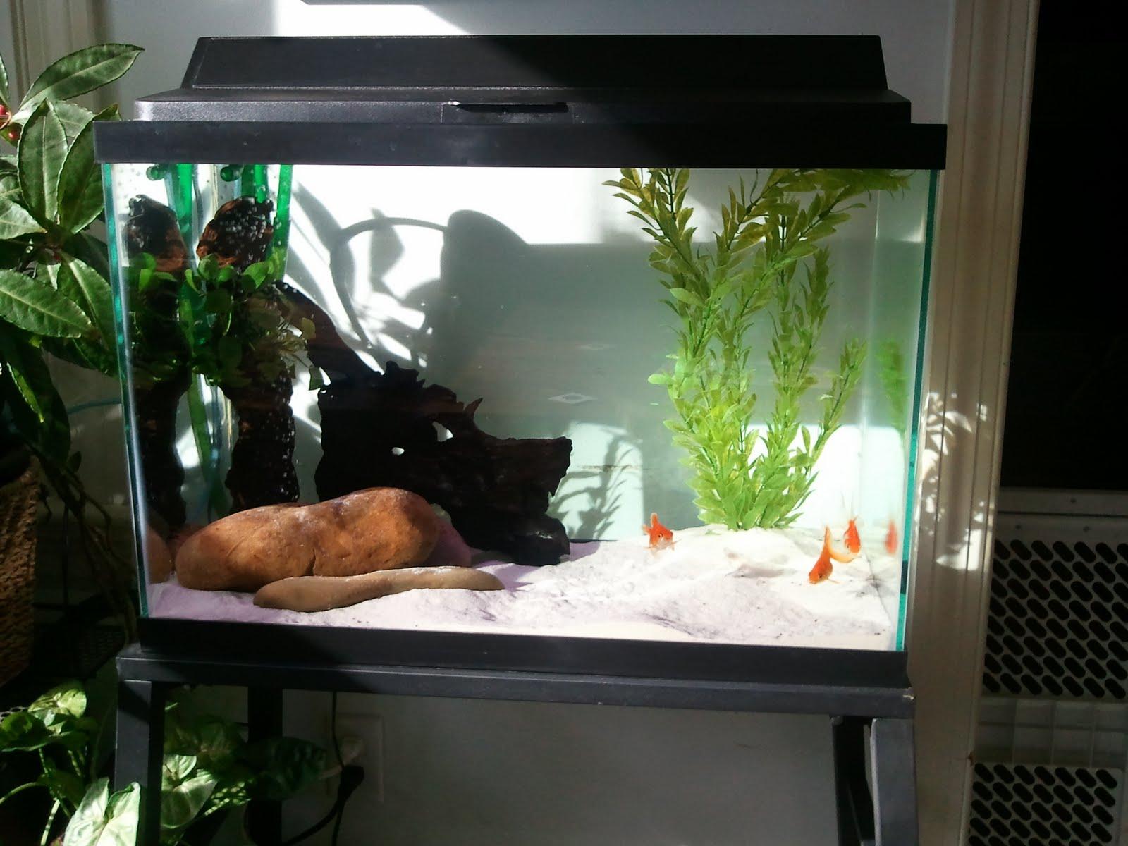 Gallery Fancy Goldfish Tank Ideas