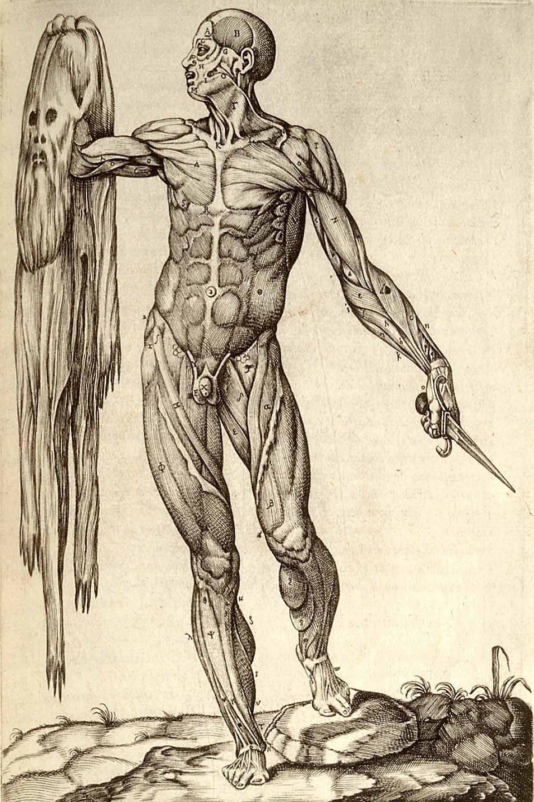 ANATOMIA HUMANA: Subdivisiones de la anatomia