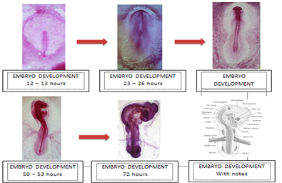 fertilization  Steps Process amp Facts  Britannicacom