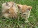 Kucing & Kelinci