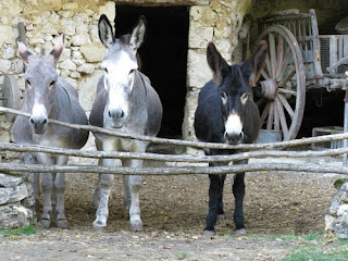 Donkeys on Troglodyte farm, France