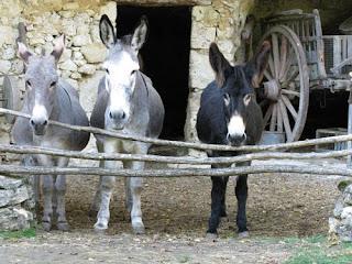 Donkeys on Troglodyte farm, France
