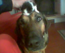 Com os seus amigos gatinhos...