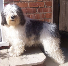 Snoopy the Polish Lowland Sheepdog