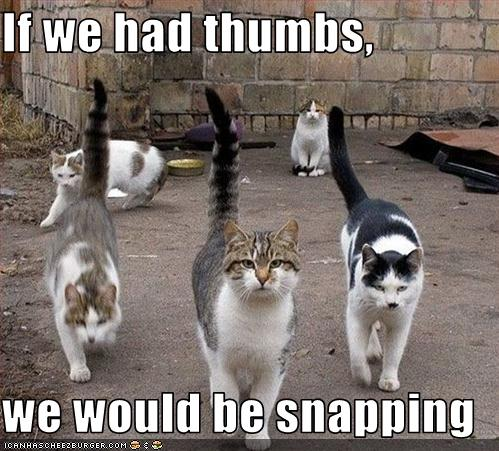 funny photos of cats. funny cats