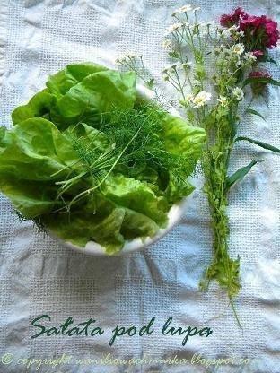 Warzywa pod lupą- sałata