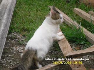 curios white fat cat