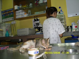 comel at the veterinary clinic