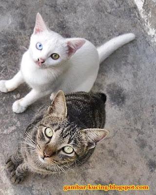 mata kucing cantik