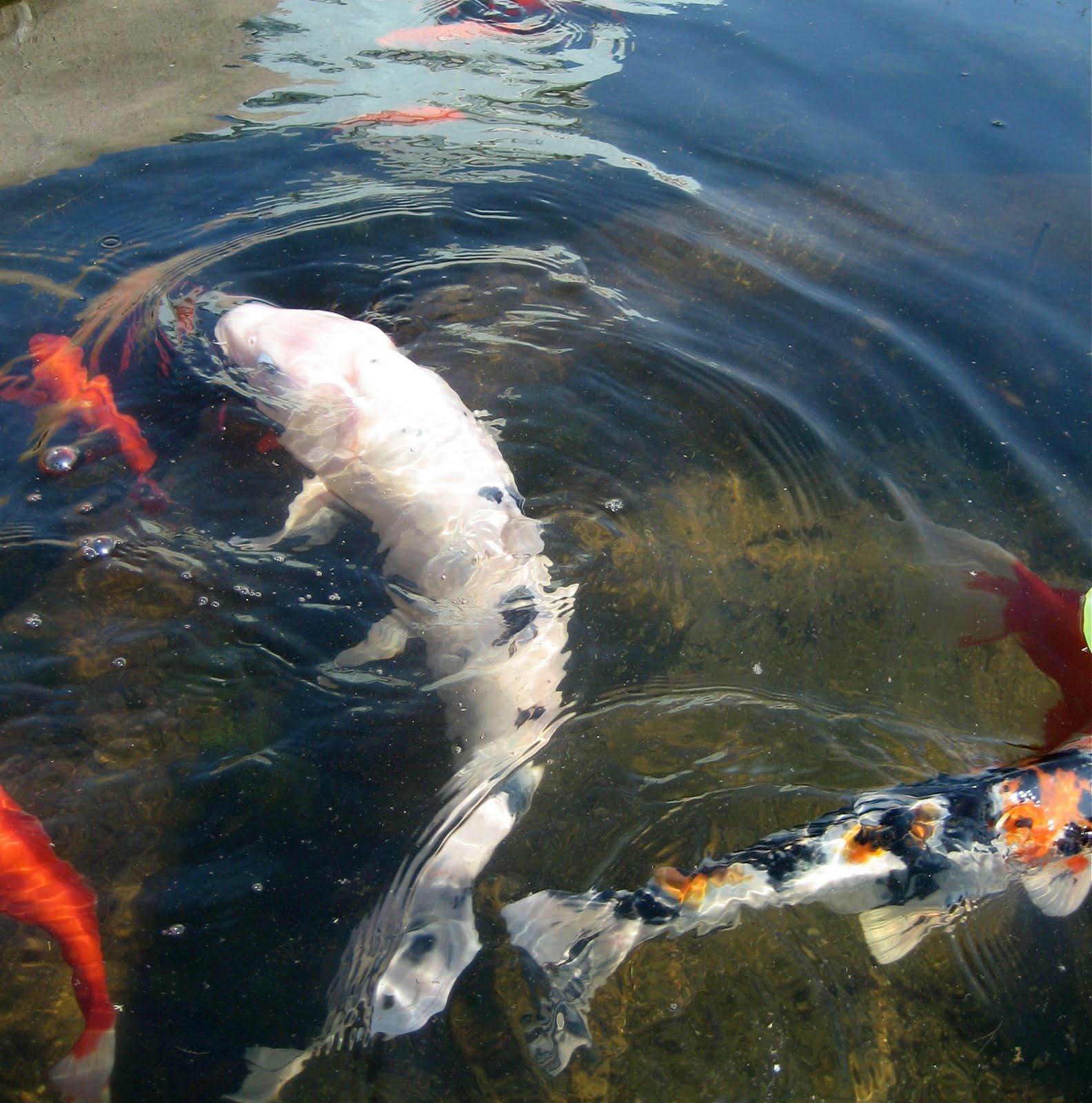 Susan rosen pics a big fish in a small pond for Big fish little pond