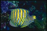 ikan di dasar laut