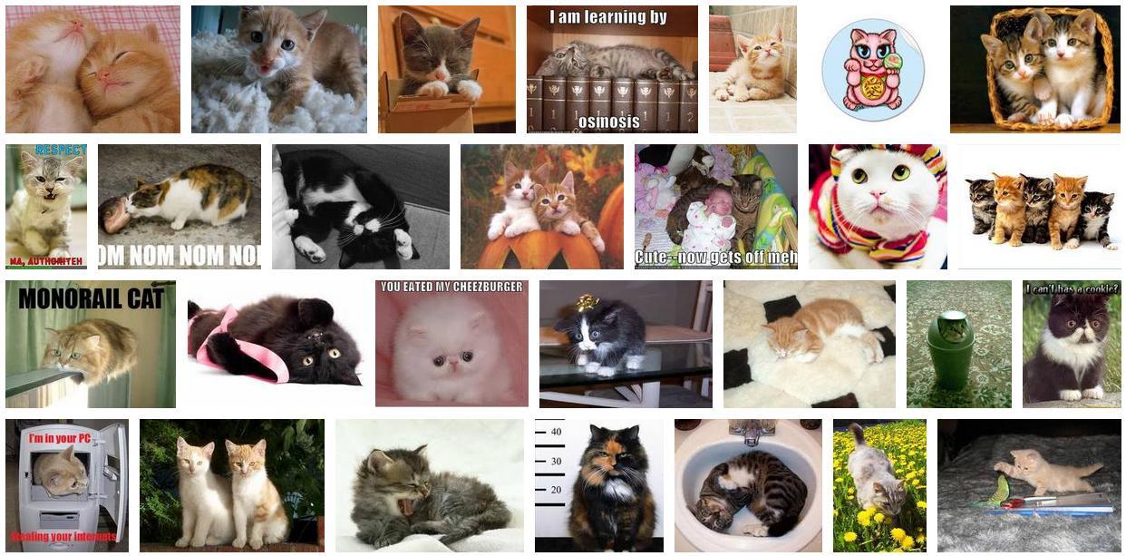 Fenomena Dunia Kumpulan Gambar Kucing Cute Lucu Cutie Cat
