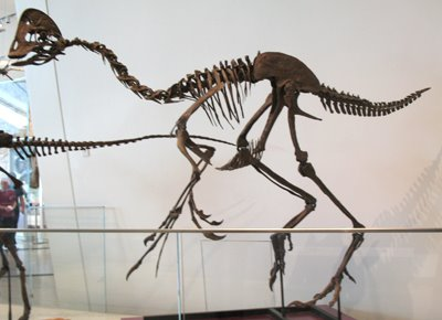 [VE_Oviraptor_fossil]