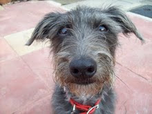 Tilly The Rescue Dog's Blog