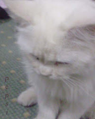 بيبسى قطى العزيز