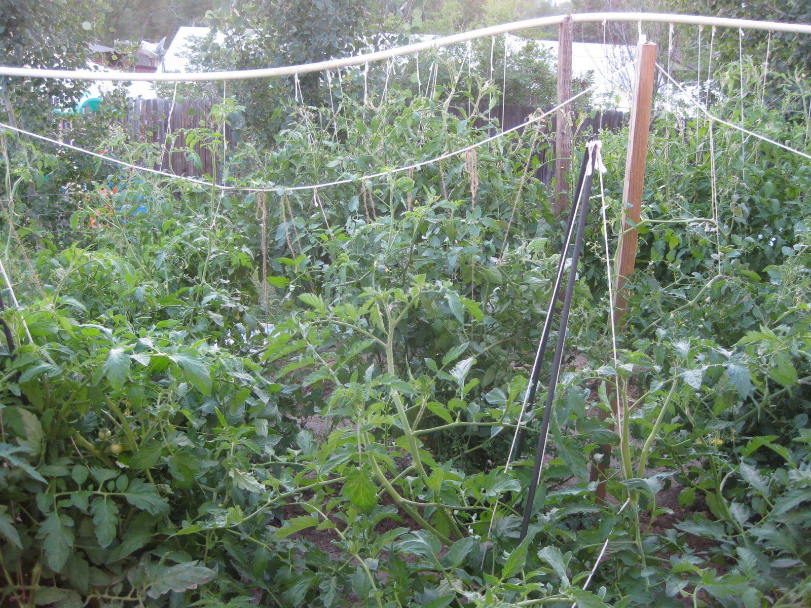 The Kitchen Witches 39 Garden