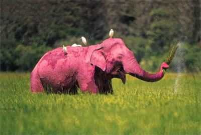 http-::thelanguageoflight.files.wordpress.com:2009:09:pink_elephant.jpg