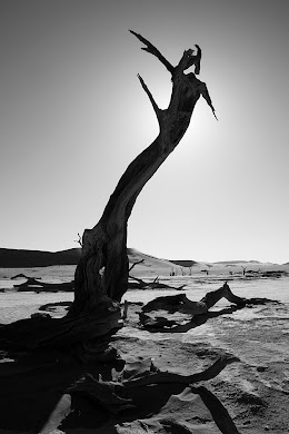 Dead acacia tree in Dead Vlei, Namib-Naukluft National Park, Namibia © Matt Prater