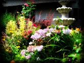 My Garden Haven