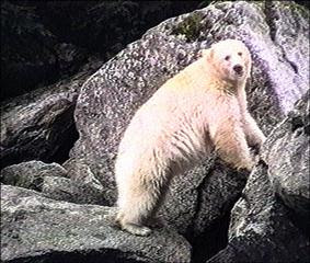 5 paragraph essay on touching spirit bear