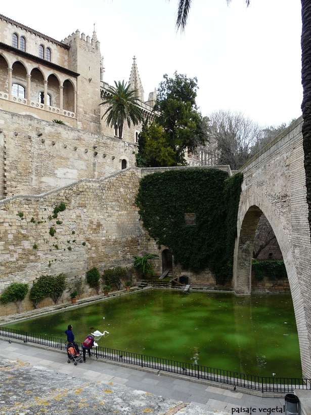 1000 images about palma de mallorca ver y disfrutar on - Estanque de jardin ...
