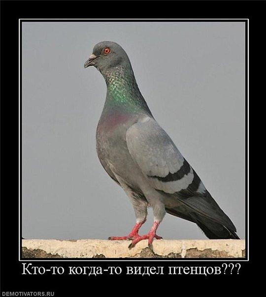 Как выглядят птенцы голубя