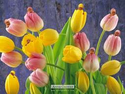 flor de beleza.