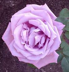 "Alejandra Pizarnik <a href=""http://soloveorosas2.blogspot.com/"">Sólo veo rosas</a>"