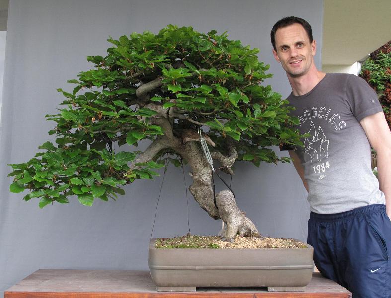 bonsai und beistellpflanzen mai 2010. Black Bedroom Furniture Sets. Home Design Ideas