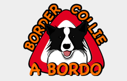 Border Collie a Bordo!