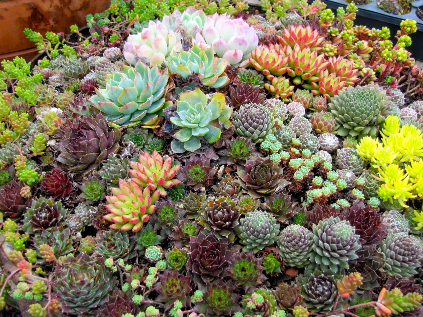 Garden dancing the amazing world of succulents for Jardin plante