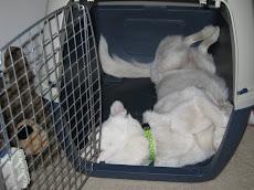 Crazy Dog #2