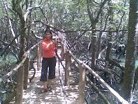 Indiana Jones and the bridge over the mangrove swamp