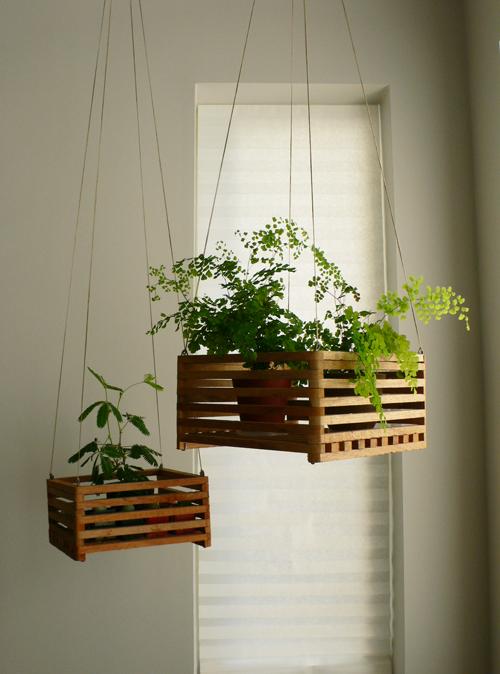Plantas colgantes para casas con gatos - Plantas colgantes ...
