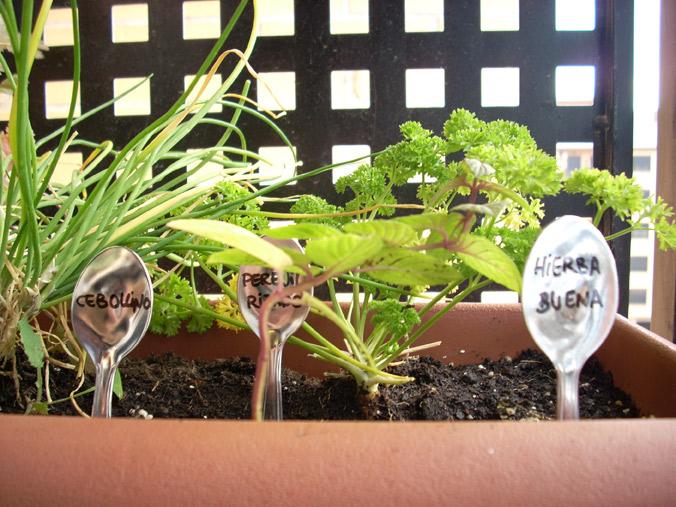 El huerto de hierbas arom ticas vitamina d - Vitaminas para plantas de interior ...