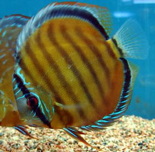 Acuario plantado con luz natural distribucion de pez for Acuarios zona norte