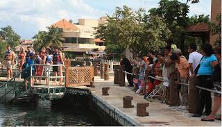 Turismo para extranjeros: los gringos lo disfrutan, los mexicanos miran cómo ellos se divierten